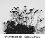 birds on top of the tree. black ...   Shutterstock . vector #608023433