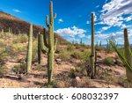 cactus fields in sonoran desert ...   Shutterstock . vector #608032397