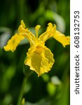 Small photo of yellow flower in afield