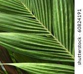 palm leaf | Shutterstock . vector #60824191