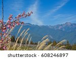 The Cherry Blossom And Reeds O...