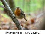 bird sitting on tree's branch... | Shutterstock . vector #60825292