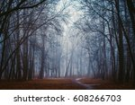 silhouette of trees in mystic... | Shutterstock . vector #608266703