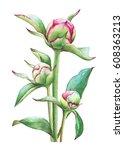 watercolor illustration of...   Shutterstock . vector #608363213