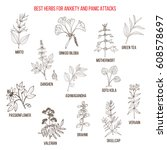 best natural herbs for anxiety...   Shutterstock .eps vector #608578697