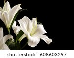 Beautiful White Lilies On Blac...