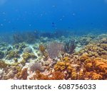caribbean colorful coral reef ... | Shutterstock . vector #608756033