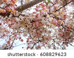 Stock photo flower 608829623