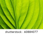 Texture Of A Green Leaf As...