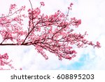 spring blossom with a blue sky... | Shutterstock . vector #608895203