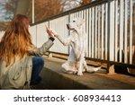 Cute Labrador Retriever Dog An...