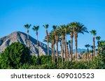 A Perfect Blue Sky  Palm Trees...