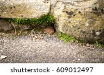 little mouse trying spot to...   Shutterstock . vector #609012497