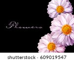 pink vector flowers isolated on ...   Shutterstock .eps vector #609019547