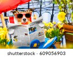 jack russell dog relaxing on a... | Shutterstock . vector #609056903