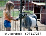 A Little Girl Feeds A Goat At ...