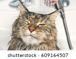 Stock photo cat bath wet cat 609164507