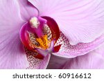 Blooming Purple Orchids Flower...