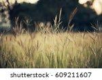 grass and sunlight  nature | Shutterstock . vector #609211607