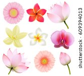 flowers collection  | Shutterstock . vector #609394013
