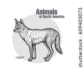 coyote hand drawing. animals of ...