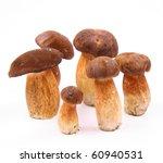 Xerocomus Mushrooms Of...