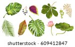 vector tropical plants and... | Shutterstock .eps vector #609412847