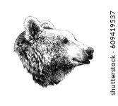the bear's head profile looking ... | Shutterstock .eps vector #609419537