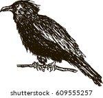 vintage drawn raven. crow  bird ... | Shutterstock .eps vector #609555257