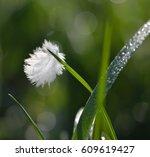 Small White Bird Feather...