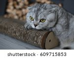 cute scottish fold cat lays on... | Shutterstock . vector #609715853