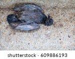 Remains Of Poor Black Bird ...