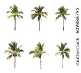 coconut or palm tree   an asian ... | Shutterstock . vector #609886793
