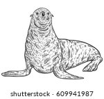 seal animal. vintage vector... | Shutterstock .eps vector #609941987