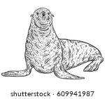 Seal Animal. Vintage Vector...