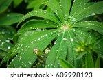 closeup of fresh vivid green... | Shutterstock . vector #609998123