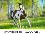 pinto horse nature portrait | Shutterstock . vector #610007267