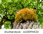 Bottom View Of A Yellow Chaga...