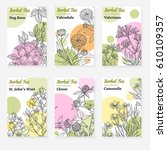 package templates for herbal... | Shutterstock .eps vector #610109357
