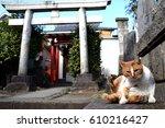 A Sitting Cat And Torii Gate A...