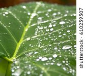 some drops in a leaf after  ... | Shutterstock . vector #610259507
