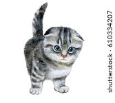 little fluffy grey kitten....   Shutterstock . vector #610334207
