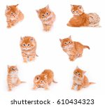Stock photo a large collection of small red kittens on white background isolated 610434323