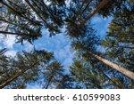 Trees Looking Up Buchanan Stat...