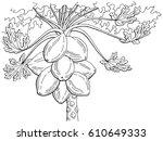 papaya fruit tree graphic black ... | Shutterstock .eps vector #610649333