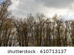 Autumn Forest Trees  Nature At...