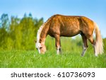 horse grazing in meadow pasture ... | Shutterstock . vector #610736093