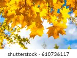 autumn yellow leaves sunlight | Shutterstock . vector #610736117