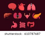 organ vector illustration | Shutterstock .eps vector #610787687