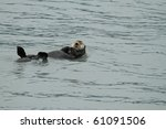 sea otter - seward / alaska - stock photo